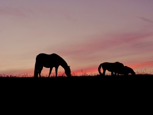 Pferdedecke Sommerdecke