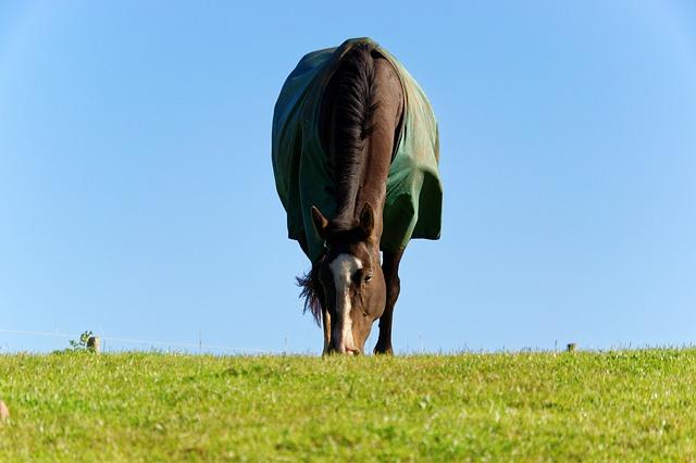 Pferdedecke Weidedecke