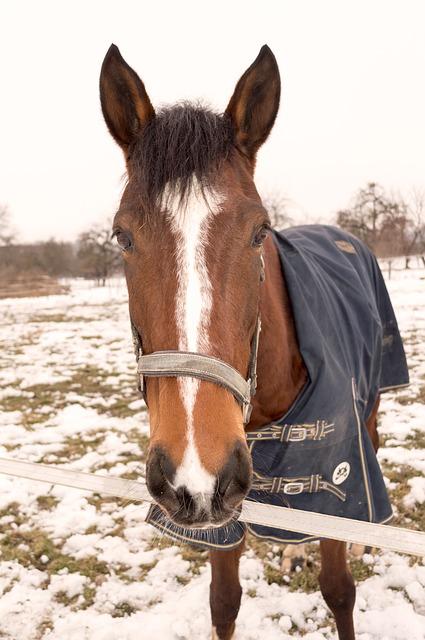 Winterdecke Pferdedecke
