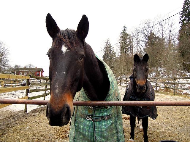 Pferdewinterdecke