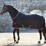 Horseware Amigo Stable Sheet 0g - Black/Purple & Mint, Groesse:155 -